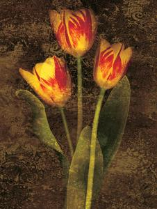 Three Tulips by John Seba