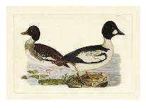 Great Blue Heron-John Selby-Art Print
