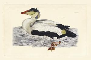 Duck III by John Selby