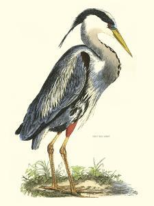 Great Blue Heron by John Selby