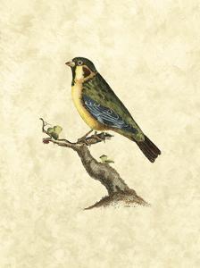 Selby Birds II by John Selby