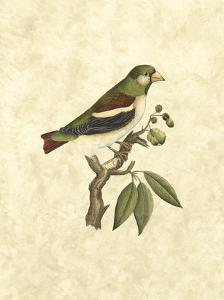 Selby Birds V by John Selby