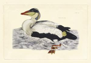 Selby Duck III by John Selby