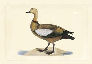 Selby Duck V by John Selby