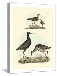 Selby Sandpipers I by John Selby