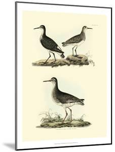 Selby Sandpipers II by John Selby