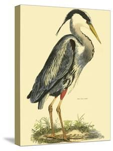 Small Great Blue Heron by John Selby