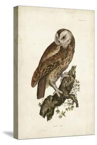 Tawny Owl by John Selby
