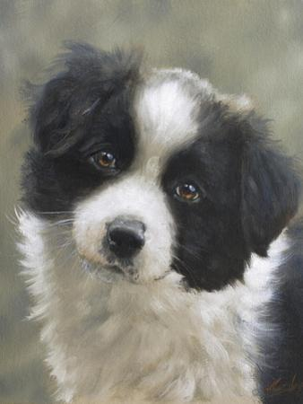 Border Collie by John Silver