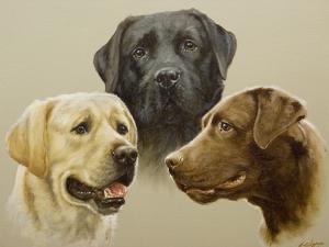 Labrador by John Silver