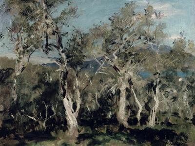 Olives, Corfu, 1912
