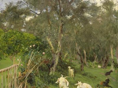 Olives in Corfu, 1909