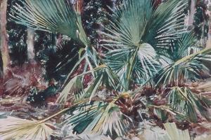 Palmettos, 1917 by John Singer Sargent