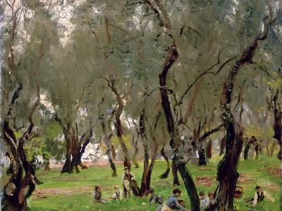 The Olive Grove, C.1910