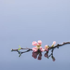 Cherry blossoms on water by John Smith