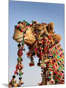 Camel Decoration at Desert Festival by John Sones