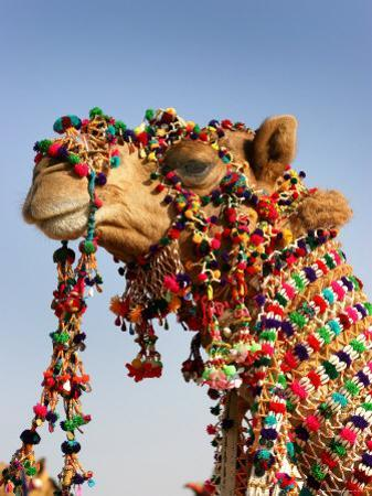Camel Decoration at Desert Festival by John Sones