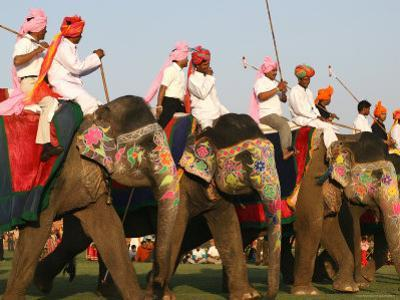 Elephant Polo at the Elephant Festival by John Sones