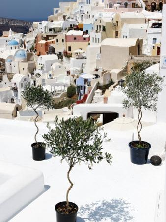 Olive Trees Overlooking Houses by John Sones