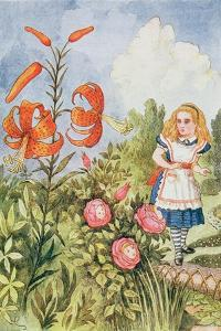 Tiger Lily, from 'Through the Looking Glass' by Lewis Carroll (1832-98) by John Tenniel