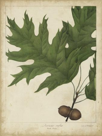 Oak Leaves and Acorns II