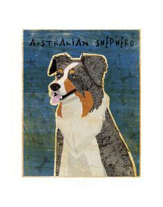 Australian Shepherd (Blue Merle) by John W^ Golden