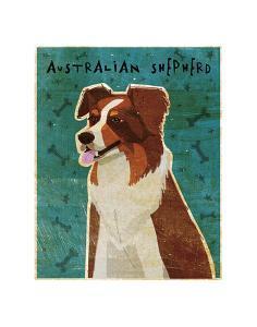 Australian Shepherd (Red) by John W^ Golden