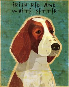 Irish Setter (Red & White) by John W^ Golden