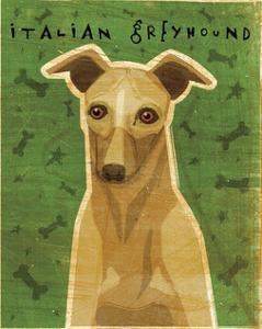 Italian Greyhound (Fawn) by John W^ Golden