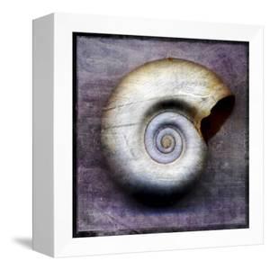 Moon Snail by John W Golden