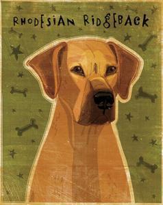 Rhodesian Ridgeback by John W^ Golden