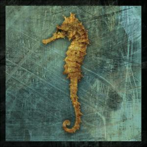 Seahorse by John W^ Golden