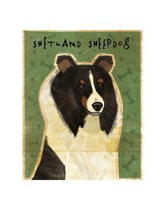 Shetland Sheepdog (Tri-Color) by John W^ Golden