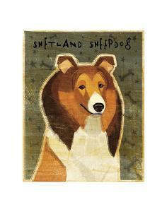 Shetland Sheepdog by John W^ Golden