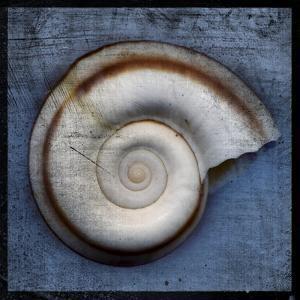Snail by John W Golden