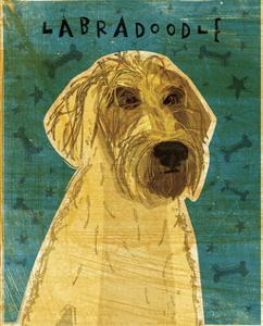 Yellow Labradoodle by John W^ Golden