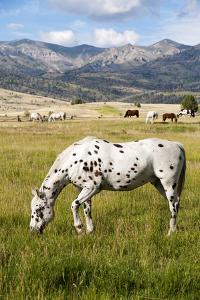 Horses Grazing at Bitterroot Ranch, Dubois, Wyoming, Usa by John Warburton-lee