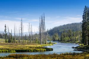 Yellowstone River, Yellowstone National Park, Wyoming, Usa by John Warburton-lee