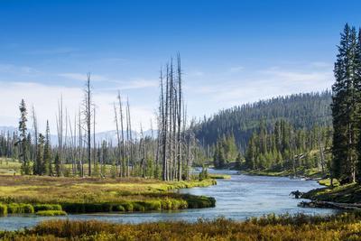 Yellowstone River, Yellowstone National Park, Wyoming, Usa