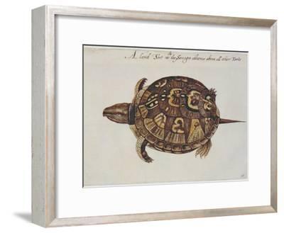Common Box Tortoise