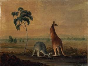 Kangaroos in a Landscape, C.1819 by John William Lewin