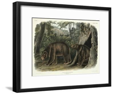 Ursus Americanus, Var. Cinnamonum (Cinnamon Bear), Plate 127 from 'Quadrupeds of North America',…