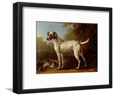 Grey Spotted Hound, 1738