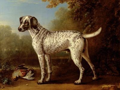 Grey Spotted Hound, 1738