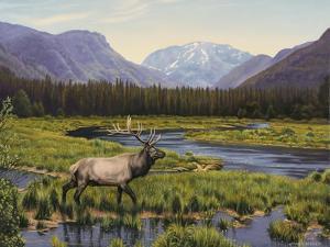 Meadows of Grand Lake, Colorado by John Zaccheo