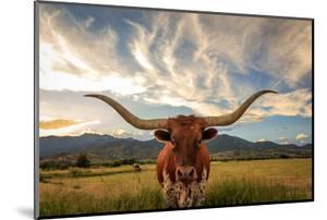 Texas Longhorn Steer in Rural Utah, Usa. by Johnny Adolphson
