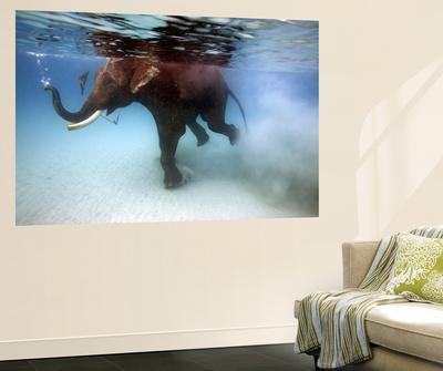 Elephant 'Rajes' Taking Swim in Sea