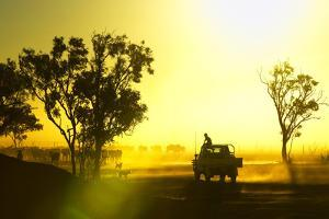 Silhouetted Cattle Muster at Sunset, Armraynald Station. by Johnny Haglund