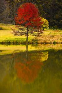 A Red Maple Tree's Reflection in the Pond in Autumn, Vienna, Virginia. by Jolly Sienda