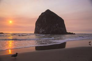 Cannon Beach, Oregon. Two seagulls on the wet beach bask in sunset at the Haystack Mountains, by Jolly Sienda